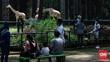 FOTO: Nostalgia Piknik di Ragunan