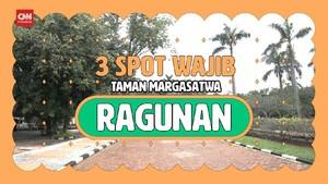VIDEO: Wisata Virtual ke Tiga Spot Favorit di Ragunan