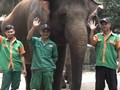 VIDEO: Kisah Kocak Para Penjaga Gajah di Ragunan