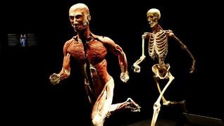 FOTO: Body Worlds, Eksplorasi Interaktif Tubuh Manusia
