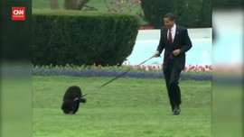 VIDEO: Bo, Anjing Keluarga Obama Meninggal Karena Kanker