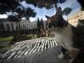 Area Sacra, Dihuni 'Hantu' Julius Caesar sampai Geng Kucing