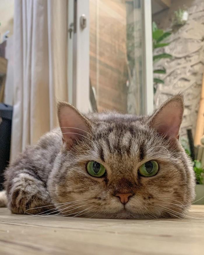 Kucing menggemaskannya ini ternyata sudah dirawat Dikta sedari Jimbon berumur dua bulan loh. (Foto:Instagram.com/dikta)