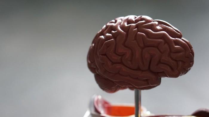 Yuk, Kenali Fungsi Bagian Otak Kiri dan Kanan Berikut Ini!