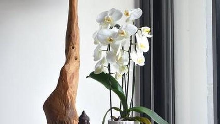 6 Feng Shui Tanaman Hias dan Posisi yang Bagus untuk Dekorasi Rumah
