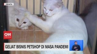 VIDEO: Geliat Bisnis Petshop di Masa Pandemi