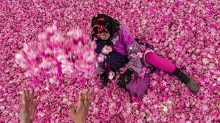 FOTO: Kisah Pilu Petani Lembah Mawar Maroko