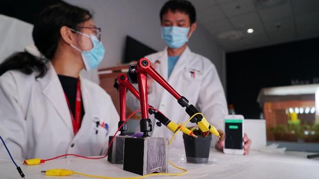 Para peneliti di Singapura telah menemukan cara untuk mengendalikan penangkap lalat Venus menggunakan sinyal listrik dari telepon pintar.