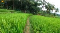 <p>Rumah yang berada di salah satu daerah di Jawa Barat ini, memiliki pemandangan yang luar biasa cantik. Pas untuk melepas penat dari kesibukan di kota besar. Bahkan orang Cimahi danSukabumi sengaja datang ke sini hanya untuk tidur dan berisitirahat. (Foto: YouTube Petualangan Alam Desaku)</p>