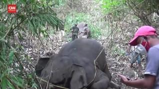 VIDEO: Belasan Gajah India Mati Tersambar Petir