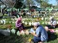 Ricuh di TPU Tegal Alur, 100 Peziarah Paksa Masuk Area Makam
