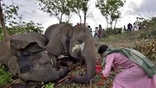 FOTO: Doa Terakhir untuk Belasan Gajah yang Tewas