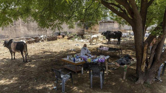 Desa di India terpaksa merawat pasien Covid-19 di bawah pohon karena kurangnya fasilitas medis. Mereka percaya pohon dapat memberi oksigen tambahan.