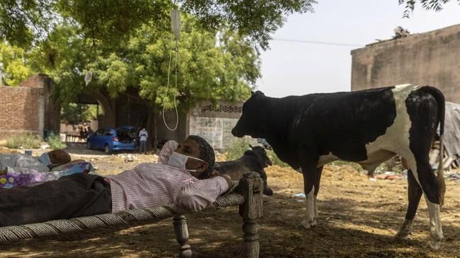 Salah satu desa di India terpaksa merawat pasien Covid-19 di bawah pohon karena kekurangan tabung oksigen. Mereka meyakini pohon dapat menambah kadar oksigen.