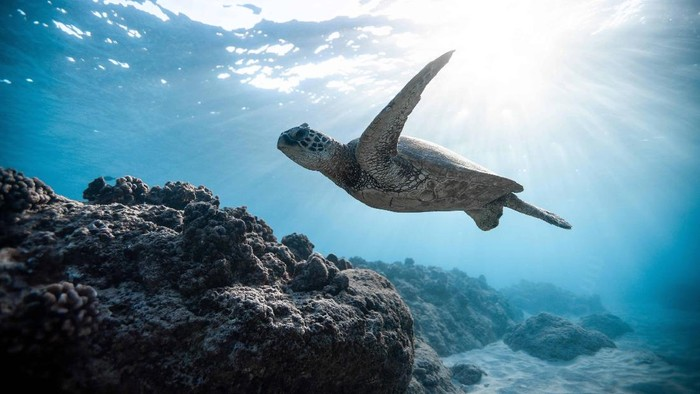 Yuk, Selamatkan Laut dengan Menerapkan Blue Beauty!