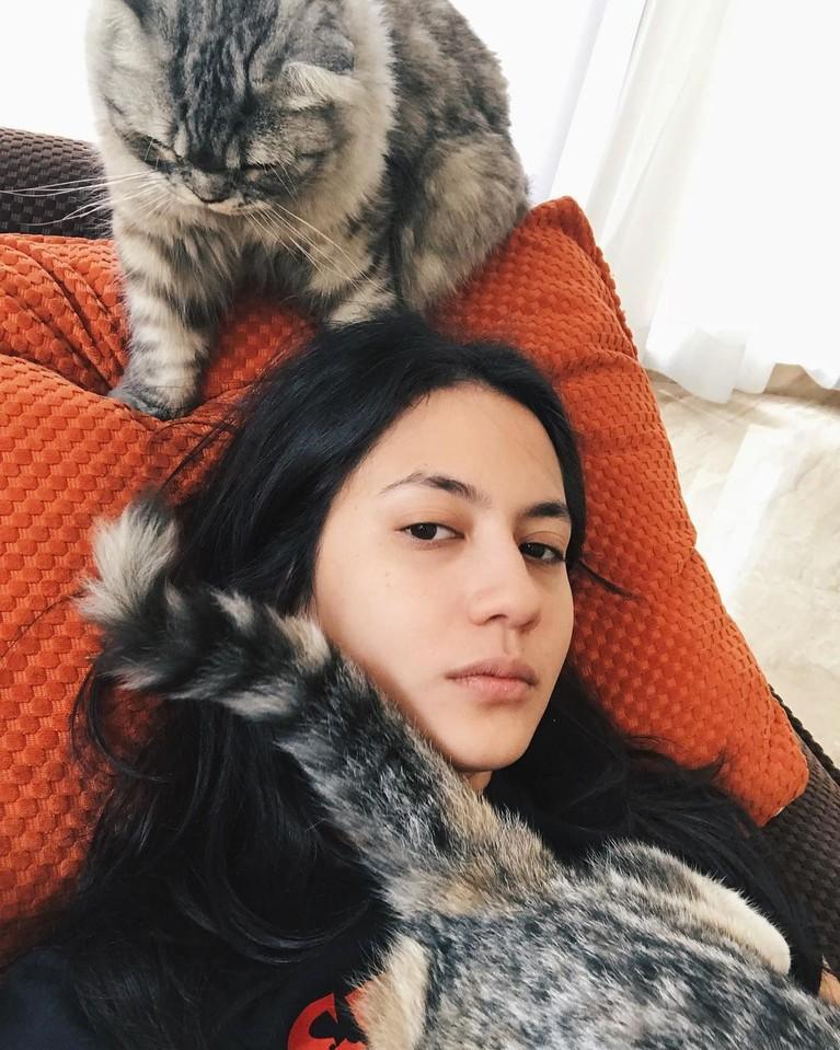 Berikut inilah para artis dengan kucing mahalnya