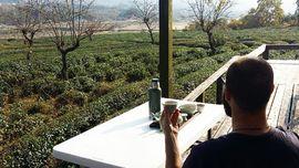 7 Rekomendasi Wisata Kebun Teh di Korea Selatan
