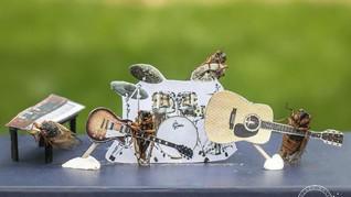 FOTO: Aksi Para Jangkrik, Main Musik hingga Divaksin
