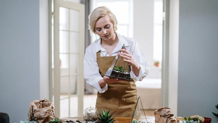 5 Cara Merawat Indoor Plant agar Tak Mudah Layu dan Tetap Subur