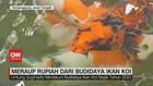 VIDEO: Meraup Rupiah dari Budidaya Ikan Koi