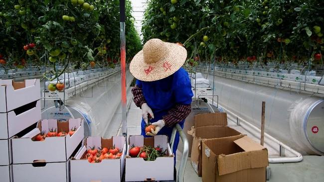 Pertanian berteknologi tinggi tumbuh subur di China, di tengah desakan akibat kemunculan pandemi Covid-19 dalam setahun belakangan.
