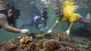 FOTO: Menyelamatkan Terumbu Karang Nusa Dua yang Sekarat