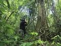 Jagawana Leuser, Profesi Menantang Penjaga Paru Dunia