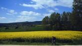 Jalur Camino de Santiago di Spanyol kembali ramai oleh peziarah.