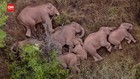 VIDEO: Peneliti Cari Penyebab Gajah Berimigrasi ke Yunan