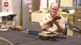 VIDEO: Fosil Dinosaurus Raksasa Ditemukan di Australia