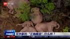 VIDEO: Kawanan Gajah Beristirahat di Tengah Hutan Tiongkok