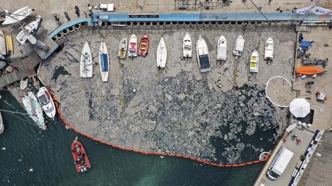 Wabah ingus laut meledak di sekitar Laut Marmara Turki di pantai Caddebostan, Istanbul.