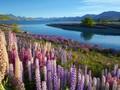 7 Destinasi Wisata di Selandia Baru yang Buat BTS Terkagum
