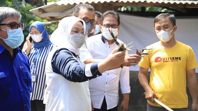 Selain membuktikan kemampuan masyarakat untuk bertahan, kelompok budidaya ikan nila dan lobster di Tasikmalaya itu juga membuka lapangan kerja baru.