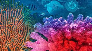 Mengingat Kehidupan di Lautan
