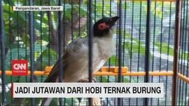 VIDEO: Jadi Jutawan Dari Hobi Ternak Burung