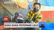 VIDEO: Sehari Menjadi Peternak Lele