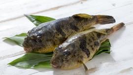 4 Hewan Laut Beracun yang Jadi Makanan Khas di Dunia