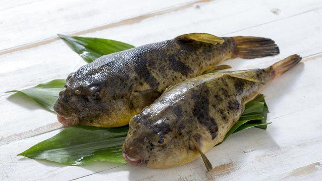 Berikut beberapa kuliner populer yang dibuat dari hewan laut yang beracun. Namun berkat pengolahan yang tepat, hewan laut ini bisa dimakan.
