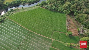 FOTO: Ancaman Penyusutan Lahan Pertanian di Bekasi
