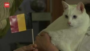 VIDEO: Kucing Achilles Sukses Prediksi Belgia vs Rusia
