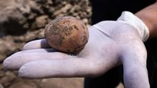 FOTO: Arkeolog Israel Temukan Telur Ayam Berumur 1.000 Tahun