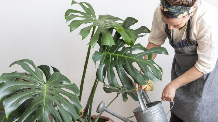 Young happy brunette woman pouring water from watering can on potted plants in her home greenhouse, her little private garden.