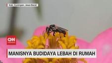 VIDEO: Manisnya Budidaya Lebah di Rumah