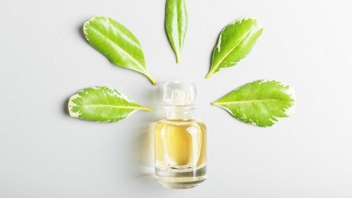 Rekomendasi Parfum Green Tea, Segar Sepanjang Hari!