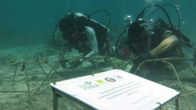 PLN Peduli melalui program CSR melakukan transplantasi terumbu karang pada Selasa (15/6) di KKPD Kabupaten Konawe Selatan, Sulawesi Tenggara.