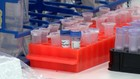 VIDEO: Vaksin Merah Putih Mulai Uji Klinis Januari 2022