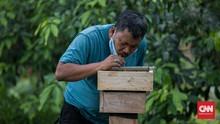 FOTO: Mengintip Budidaya Lebah Madu di Hutan Kota Srengseng