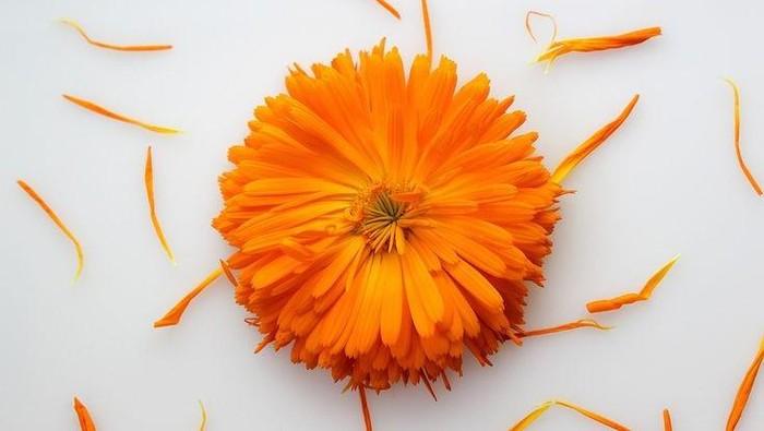 Populer di 2021, Bongkar Fakta Kegunaan Bunga Calendula bagi Kecantikan Wajah