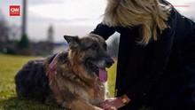 VIDEO: Anjing Kesayangan Joe Biden Mati di Usia 13 Tahun
